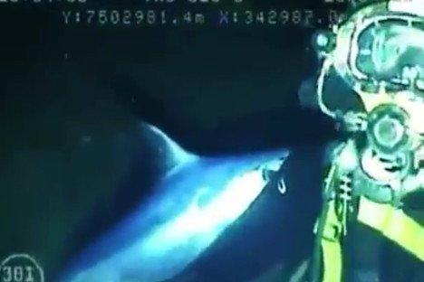 diver-swordfish