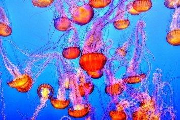 Sea Lice Invades Gulf Coast Beaches