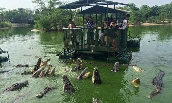 croc farm