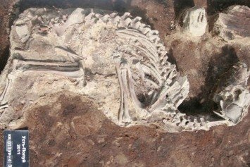 Pet Cemetery 2,000-Years-Old Discovered in Siberia