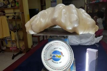 Giant Pearl Weighing 75 Pounds Maybe World's Biggest