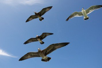 How Seabirds Can Guide You to Good Fishing