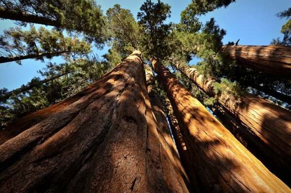 5 Ways to Explore the Kern River - LiveOutdoors
