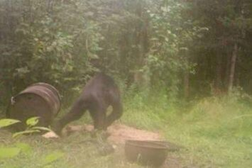 Mysterious UP Trail Photos Leave Bigfoot Believers Split