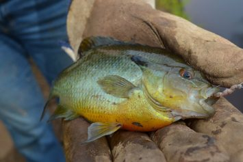 3 Go-To Lures for Summer Panfish