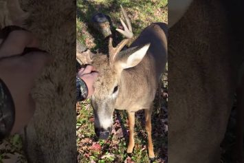 Hunter Pets Deer at Base of Tree Stand