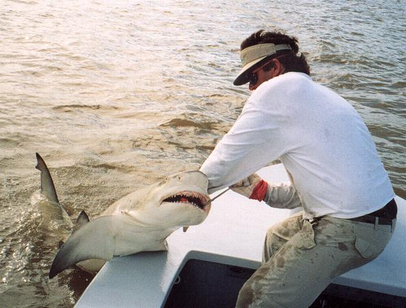 Top 5 shark fishing destinations in america liveoutdoors for Shark fishing in florida