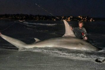 Australia Surf Caster Hooks Unofficial Hammerhead Record