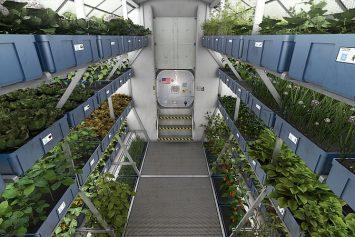 How to Grow Food on Mars