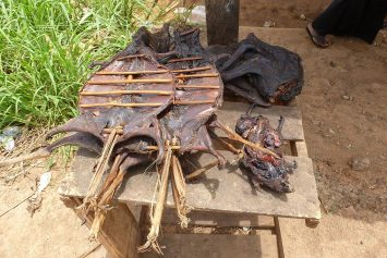 Bushmeat Hunters Threaten More Than 300 Mammal Species