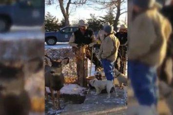 Kansas Game Warden Shoots Pet Deer, Traumatizing Family