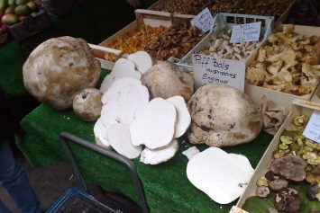5 Wild Medicinal Mushrooms You Should Know About
