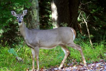 6 Spring Hunts In 6 New England States