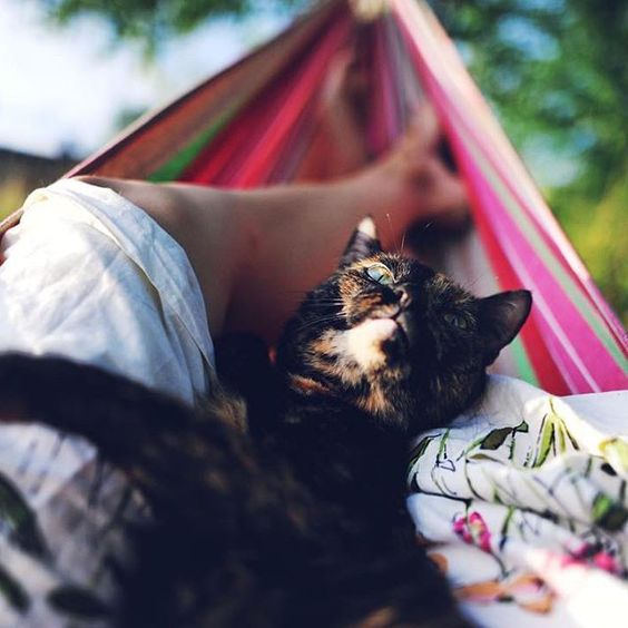 #CampingWithCats