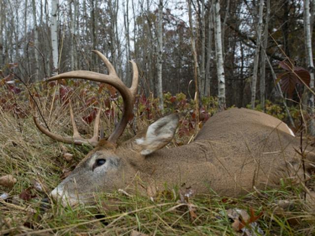 Deer down